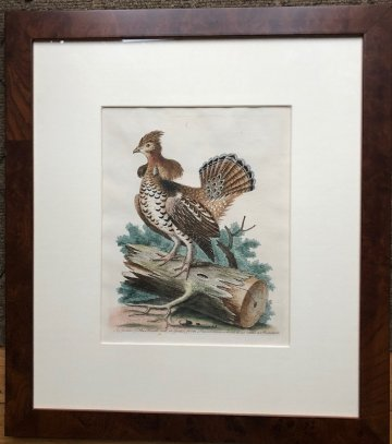 click for detailed image EdwardsRuffedGrouse.jpg