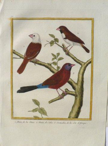 click for detailed image martinetSongbirdsVLG.JPG
