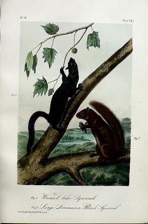 photo of print audubonoctavoclii.vlg.jpg