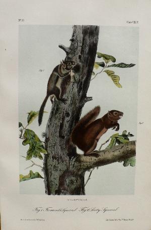 click for detailed image audubonoctavosfremontvlg.jpg