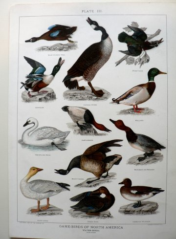 click for detailed image Waterbirds.JPG